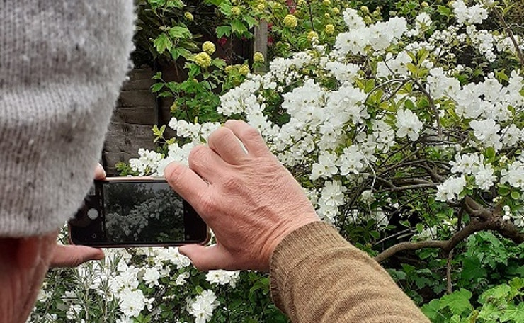 hand holds camera pointing at flowers